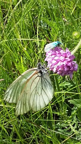bloem vlinder vlieg