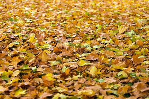 herfst loslaten blad